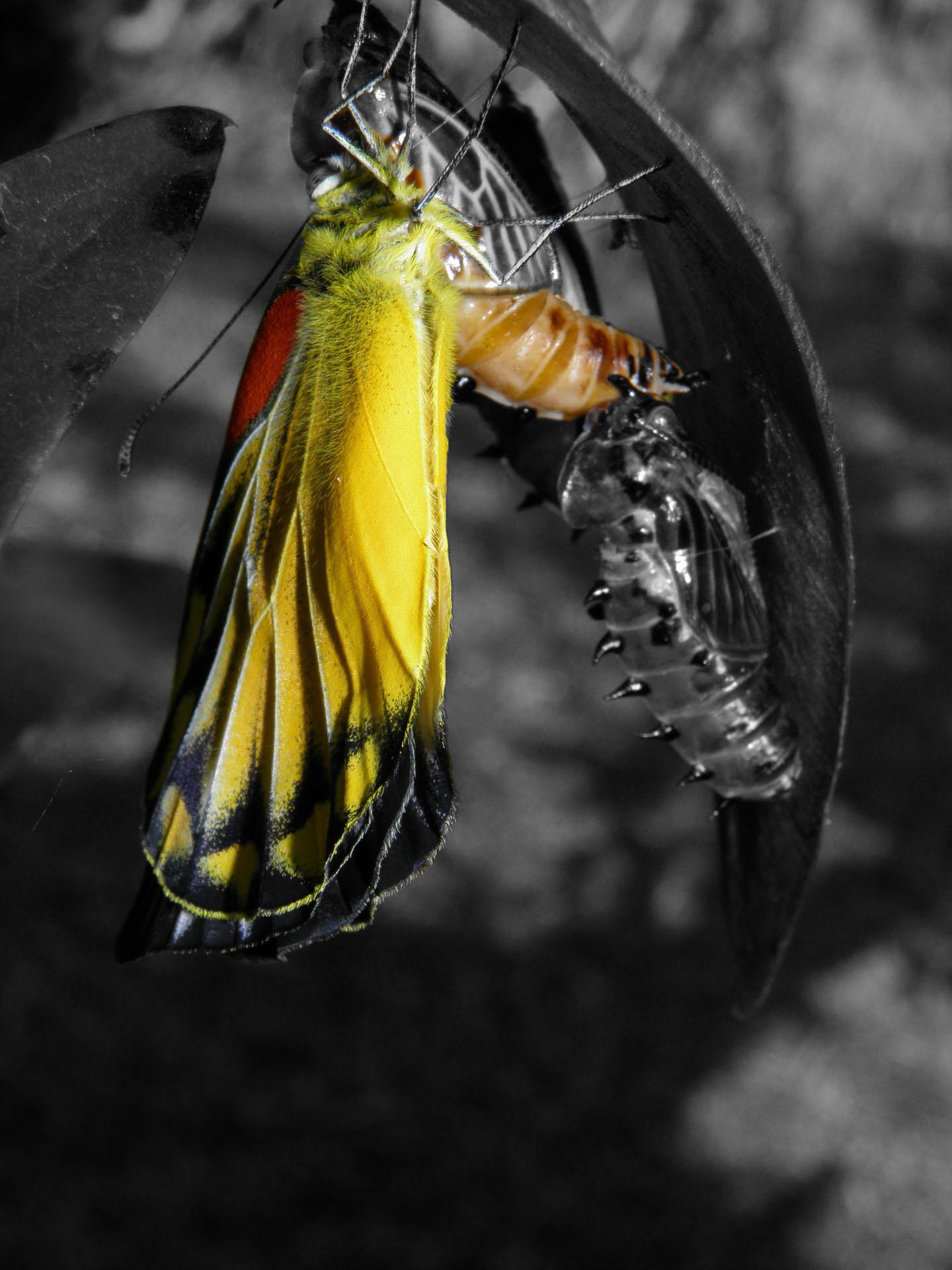 papillon en couleur qui se transforme